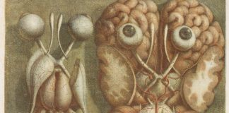An illustration of a disembodied pair of human eyes, seen from the back, next to a second illustration of a pair of human eyes seen from the front, against the backdrop of a human brain.
